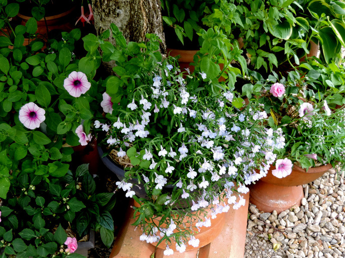 Fleurs de Juin...