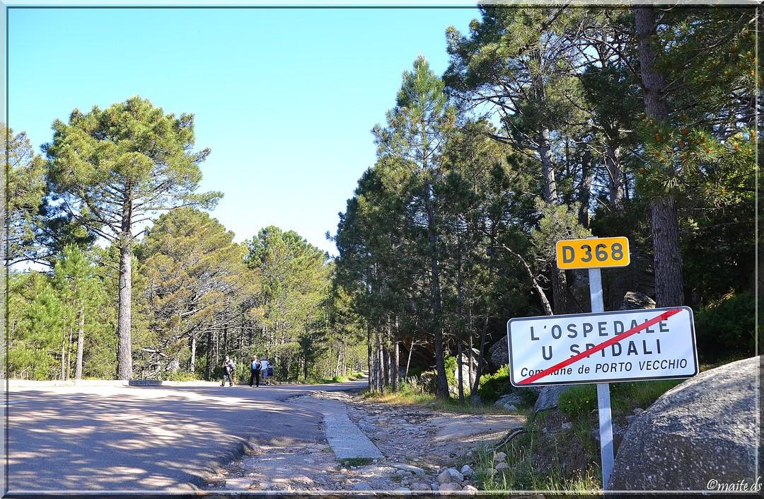 Forêt de l'Ospédale - Corse