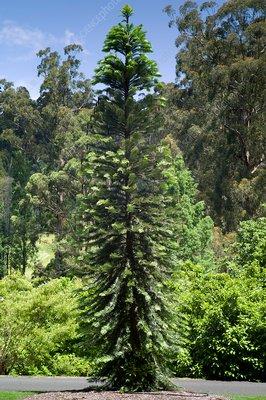 Des arbres préhistoriques sauvés de l'incendie ...