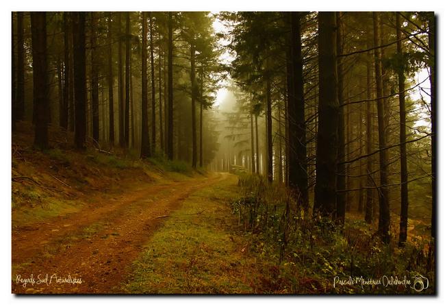 Partage photos d'octobre : Chemin