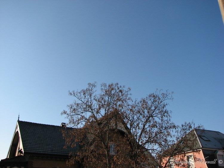 Ciel d'Alsace 495
