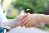 grand mere : Mains des jeunes et seniors titulaires d'un pissenlit jaune