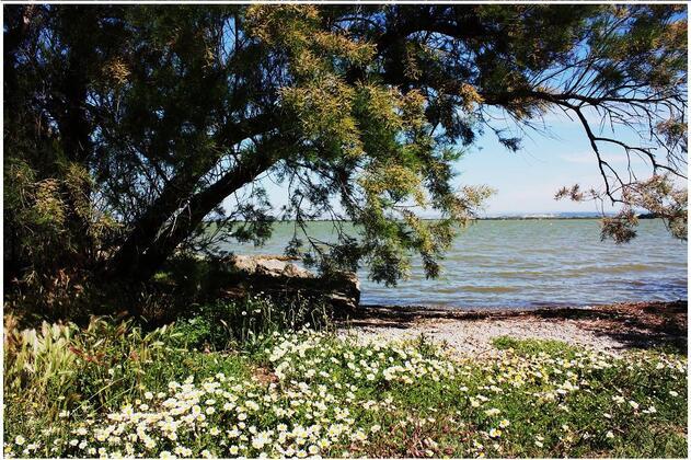 L'étang de Bolmon, site protégé