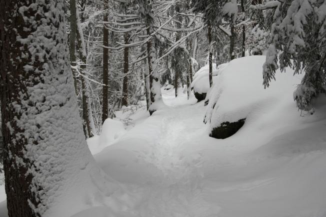 Sous le manteau blanc, dans la forêt