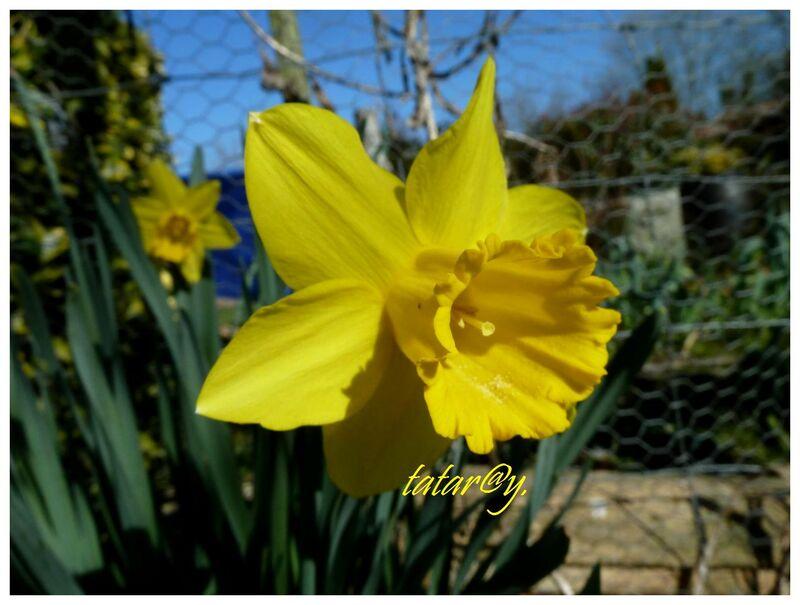 Du soleil au jardin ....