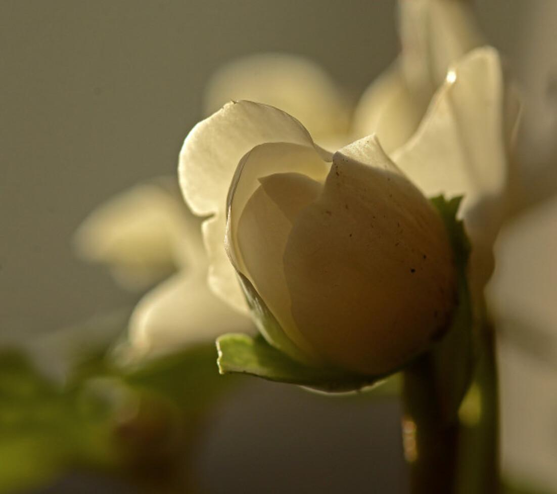 Fleurs-13-6096.jpg