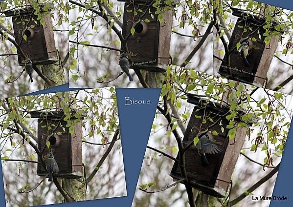 1-2012-04-015.jpg