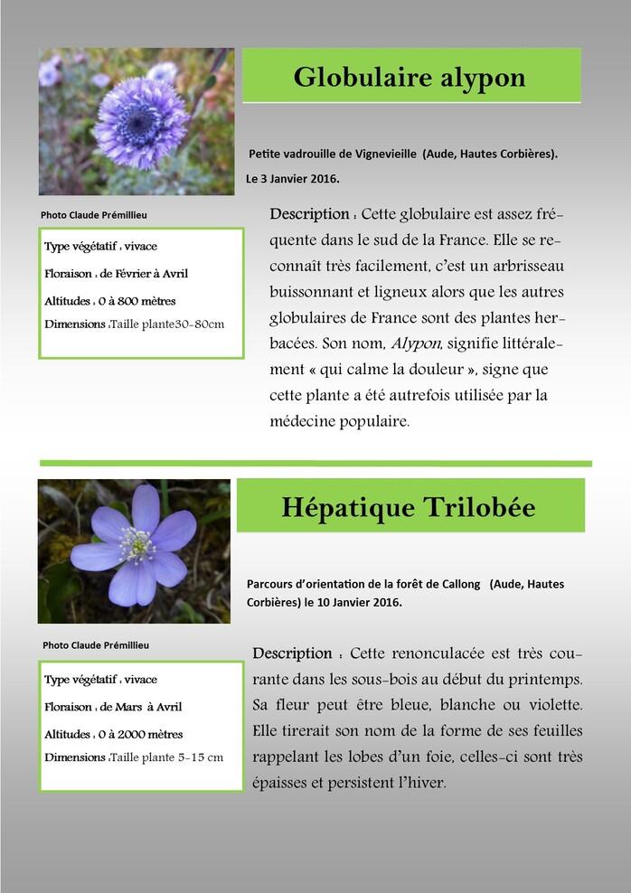 Balade florale