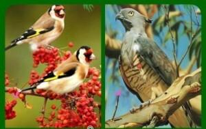 Birds similarities