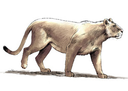 Le lion des cavernes