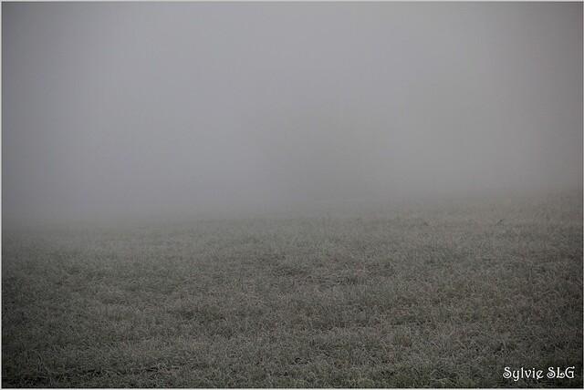 Gris-Blanc ...