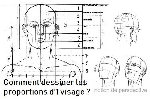 Dessin et peinture - vidéo 2895 : Quelles sont les proportions d'une tête et d'une face d'adulte 3/3 ? - le canon idéal en dessin .