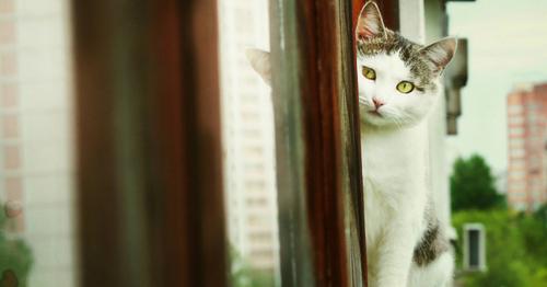 Astuces pour empêcher votre chat de tomber du balcon