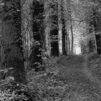 Dans la forêt .