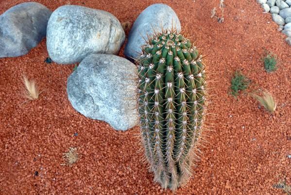 08---Cactus.JPG