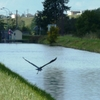 006_Pont à Bar_29_09_2012