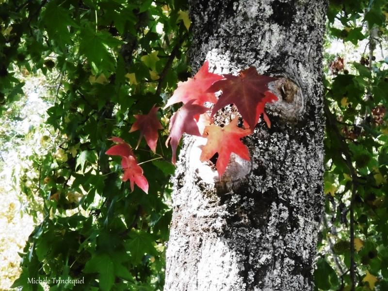 """Une balade vers """"mon"""" Lac, le 8 octobre (suite)..."""