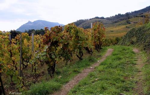 Dans les vignes de Cornas – suite: la colline de Crussol