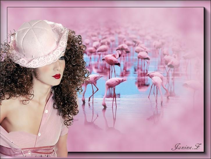 flamants rose