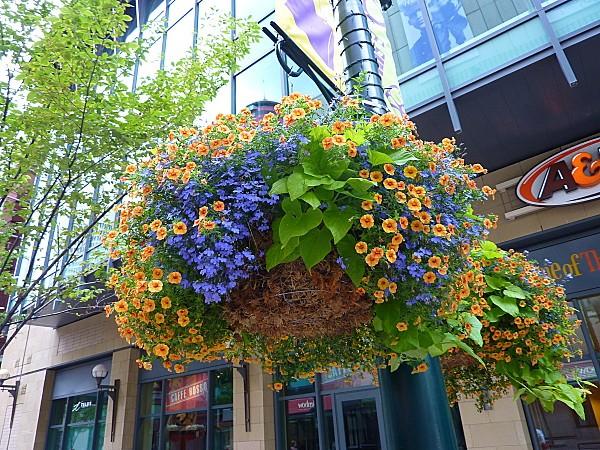 Jour 15 Calgary fleurs