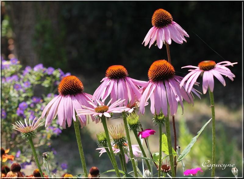 """Jardin """"Vie en rose"""""""