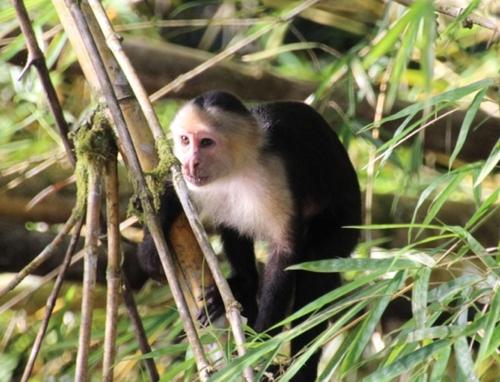 De retour du Costa Rica