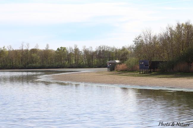 L'étang du Chapelier à Versailleux (01)