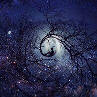 Image de stars, boy, and night