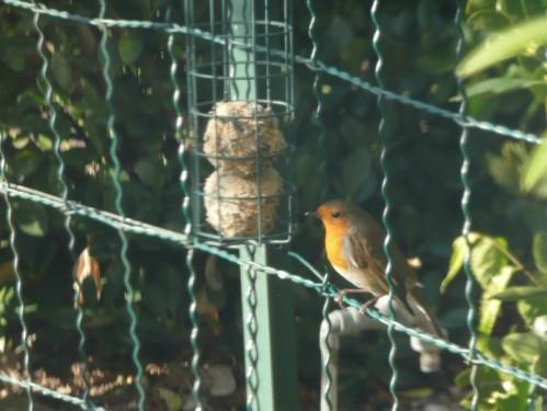 oiseaux-jardin-02.JPG