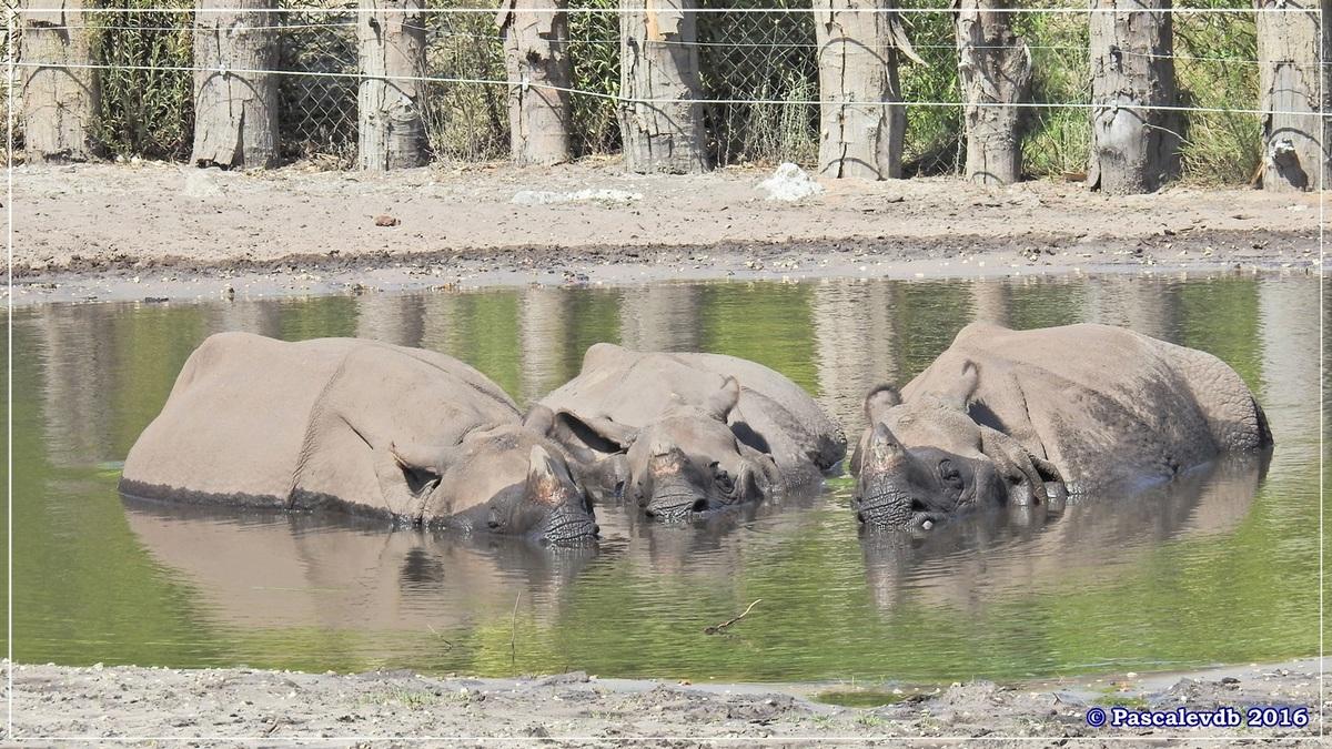 Zoo du Bassin d'Arcachon - Août 2016 - 4/15