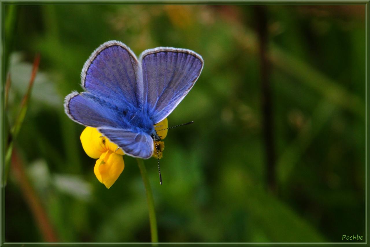 Azuré Bleu !