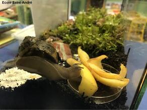Des escargots dans la classe