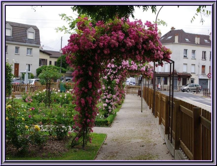 La roseraie à livry Gargan (Seine st Denis)