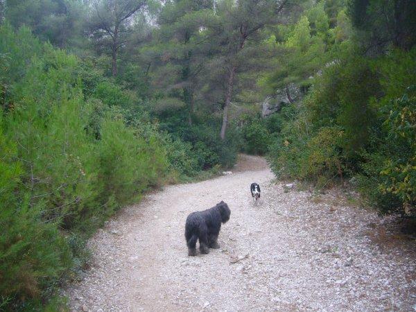 parc du Roy d Espagne