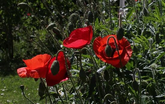 Les chouchous du jardin de mai...