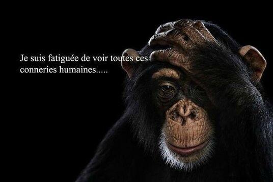 """Résultat de recherche d'images pour """"Un animal est moins violent qu'un humain proverbes"""""""