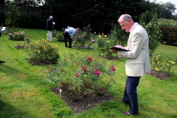 Concours international de Roses Nouvelles du Roeulx