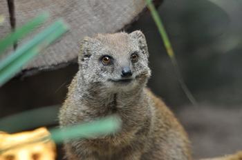dierenpark amersfoort 2011 126