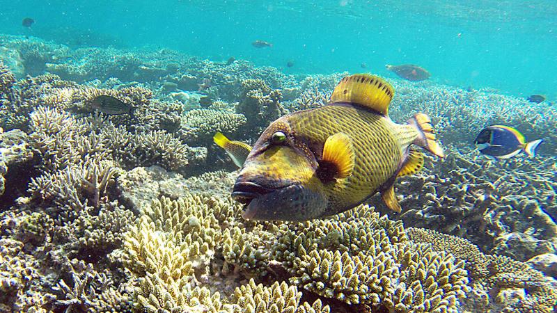 Iles Maldives : plus que quelques heures...