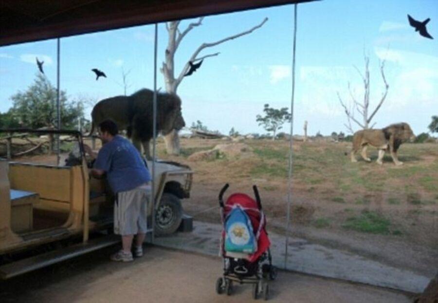 Safari en Australie