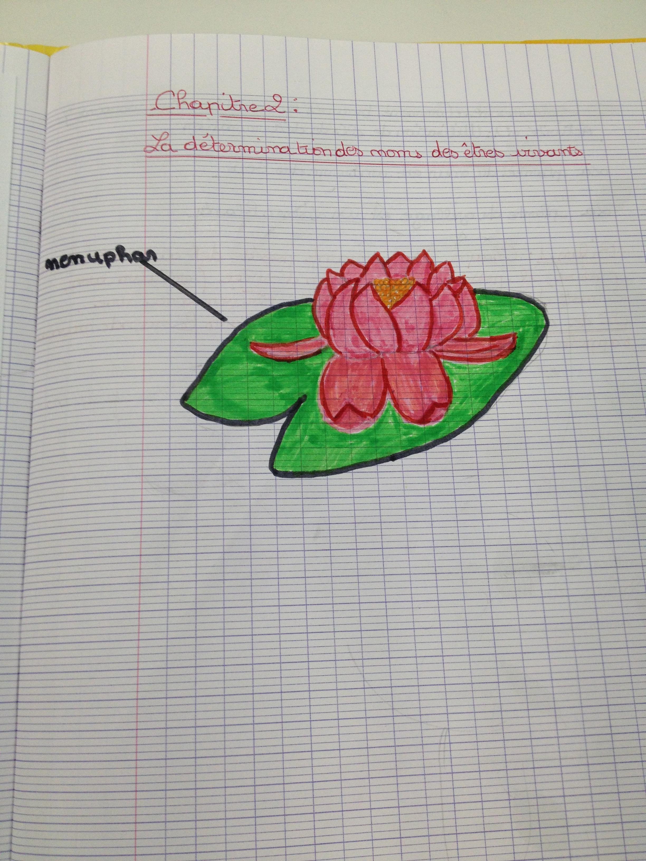 illustration d'un cahier de svt