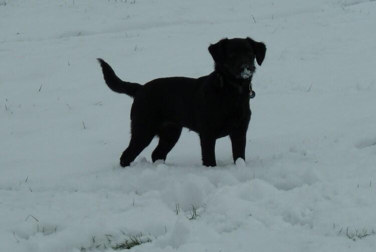 1ere neige pour Lady