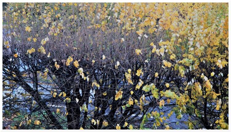 Bourrasque d'automne.