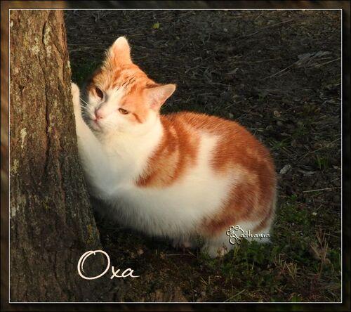 Moi Olane........