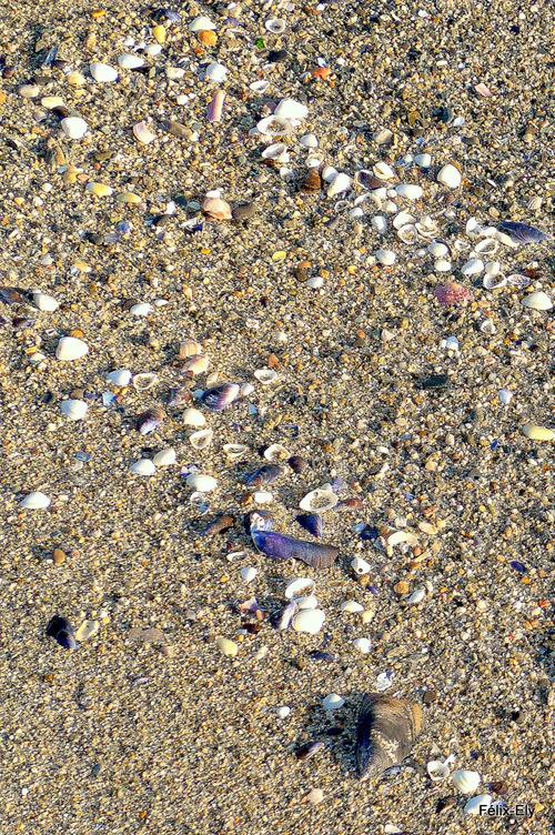 Sur la plage ... Sable et coquillages !