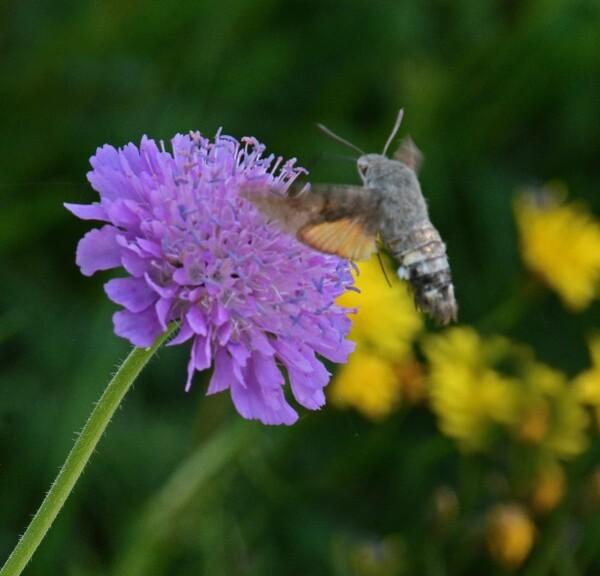 Insectes-papillons-5-2491.jpg