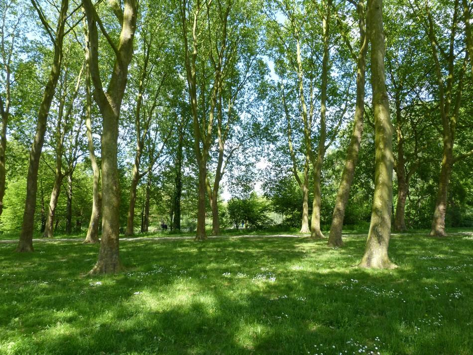 """Les """"Jardins Ouvriers"""" d'Amiens"""