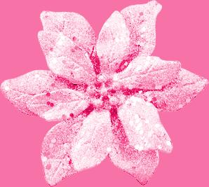 Kit Noël Rose Rose