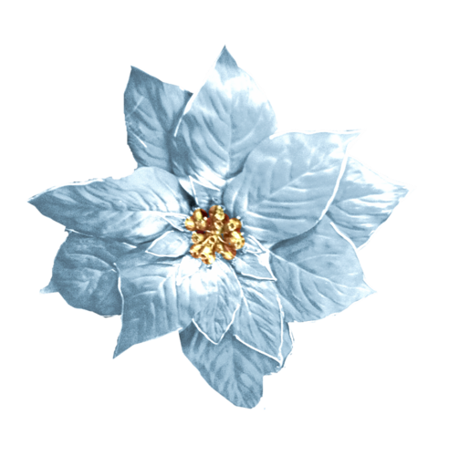 Tubes fleurs de noël 1