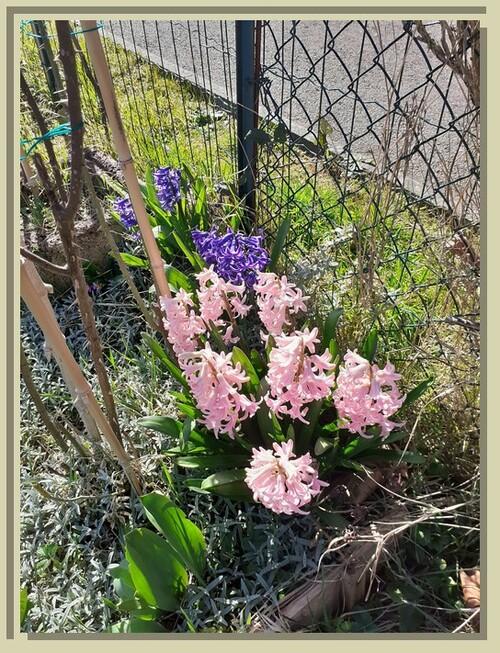 Le printemps est arrivé